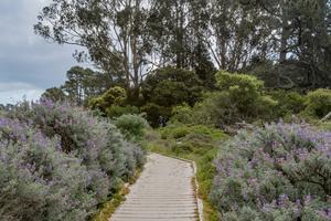 Lobos Creek Trail boardwalk
