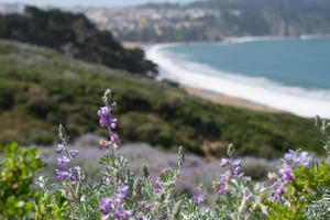 Flora surrounding the Presidio