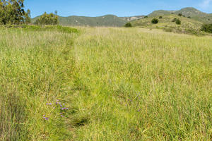 A trail cuts through tall grasses in a green field overlooking rolling hills in Rancho Corral de Tierra