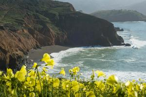 Wildflowers abound atop Mori Point