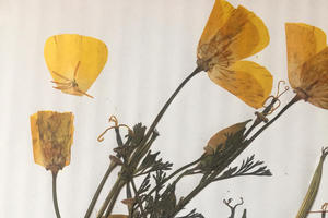 Alcatraz Gardens Class Series: Herbarium and Plant Pressing