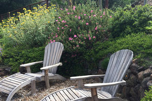 Drought Tolerant Native Plant Gardening