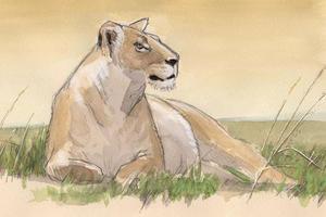 Nature Journal Club, Safari Sketching