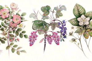 Nature Journal Club, Watercolor Pencils for Botanical Painting