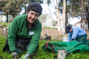 Volunteers Working on the Presidio Bluffs