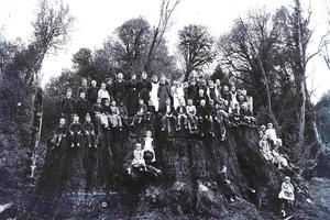 Black and white photo of people posing on Fieldbrook Stump, one of the largest trees in the world.