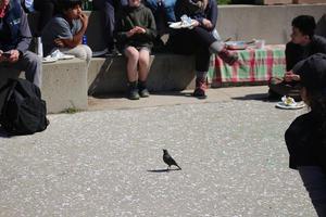 Park volunteers watch a small black bird walk along a pathway