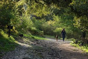 Walking the dog in Oakwood Valley