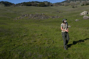 A park ranger walks in a green field on a clear day. The blue sky is visible behind rolling hills.