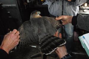 Tracking raptors