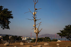 "Giuseppe Penone's ""Idee di pietra"" on display at upper Fort Mason"