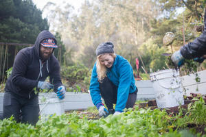Volunteers Taking Care of Plants in the Presidio