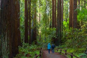 Muir Woods hikers