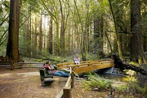 Scenic photo at Muir Woods