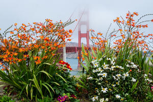 Flora juxtaposed with the bridge