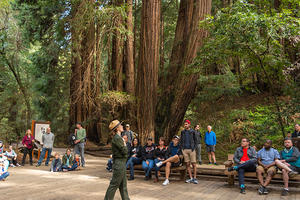 Muir Woods Tours Redwoods