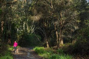 Dog walker takes her leashed dog through Oakwood Valley