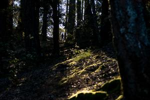 Hiking near Pantoll Campground