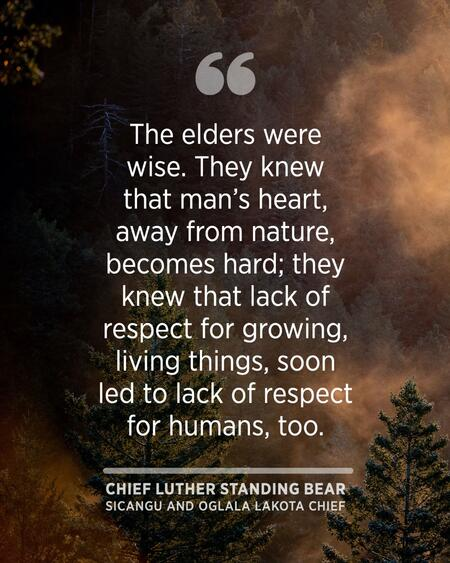 """Quote graphic saying, """"The elders were wise. They knew that man's heart, away from nature, becomes hard; they knew that lack of respect for growing, living things, soon led to lack of respect for humans, too."""""""