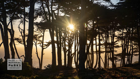 Sun setting in cypress trees over Lands End