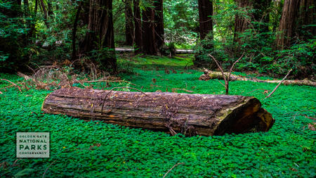 Fallen log on a lush green forest ground