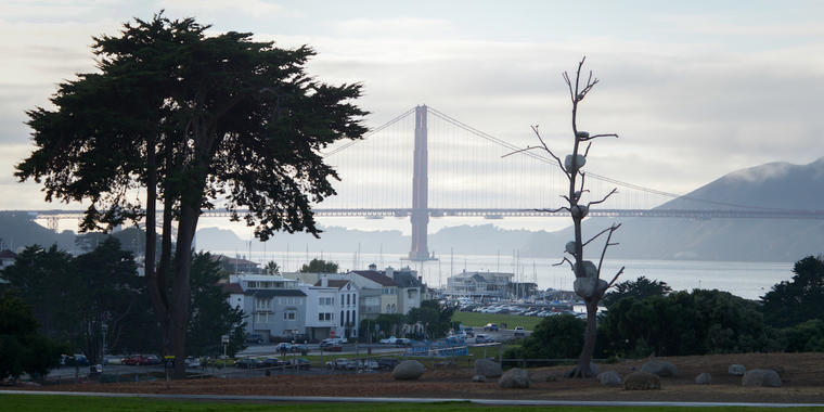 Tree with stones placed on branches with Golden Gate Bridge in background