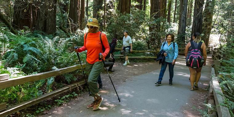 hiking at Muir Woods