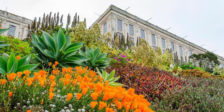 Gardens at Alcatraz