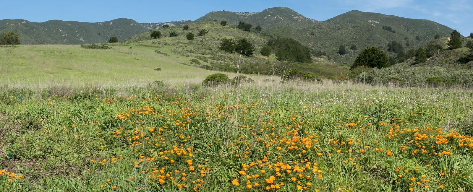 A sunny day at Rancho Corral de Tierra