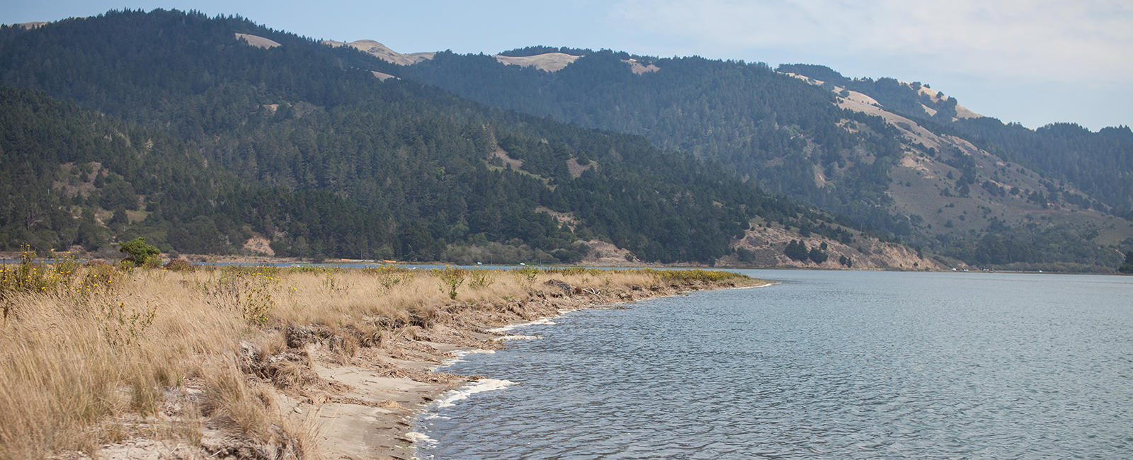 Bolinas Lagoon is host to a wide variety of wildlife.