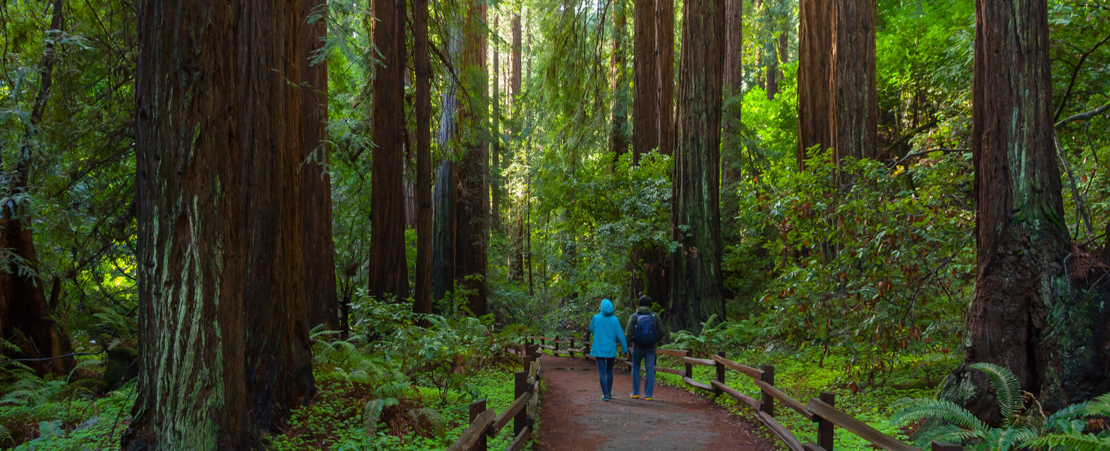 Two people walking among large redwood trees in Muir Woods.