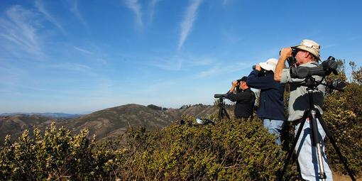 Hawk Hill birdwatching