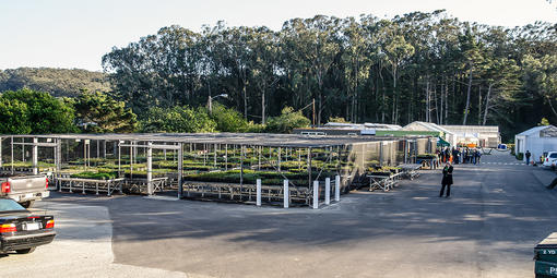 Presidio Native Plant Nursery