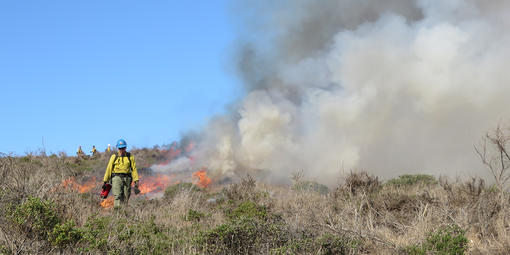 A fireman walks away from a controlled burn.