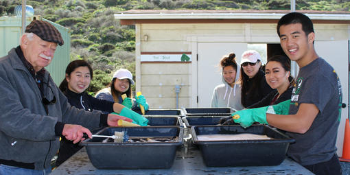 Volunteers wash pots at the Fort Funston Nursery