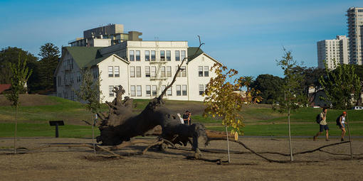 "Giuseppe Penone's ""La logica del vegetale"" on display at upper Fort Mason"