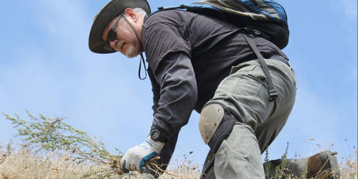 A volunteer gathers plants on a hill top