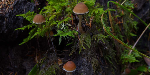 mushrooms growing within moss and ferns