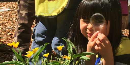 A child looks through a magnifying glass at a nurseries education program.