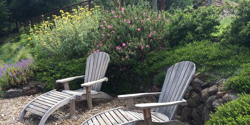 Drought Tolerant Native Plant Gardening