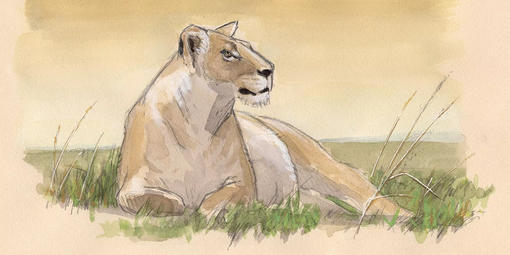 Nature Journal Club, Safari Sketching