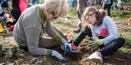 park volunteers planting