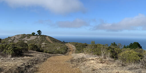 An image of a dirt walking trail with a view of a blue sky and the blue ocean.