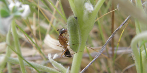 Close up between grass blades, showing an ant hovering over a caterpillar.