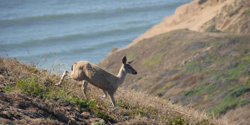 Wildlife of Point Reyes National Seashore