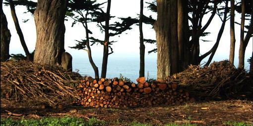 Brush Pile Sculpture