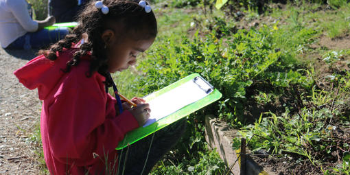 A student sketches a plant during a Seeds to Flowers program