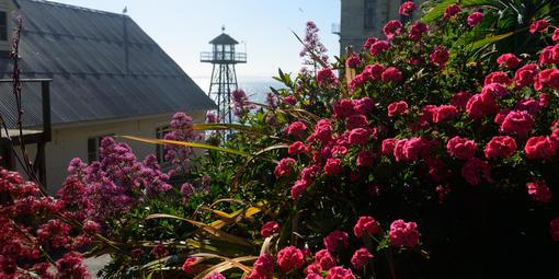 Alcatraz historic gardens