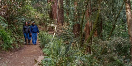 Visitors stroll through Muir Woods