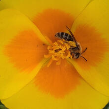 Abbotts Lagoon Bee SLeonGuerrero